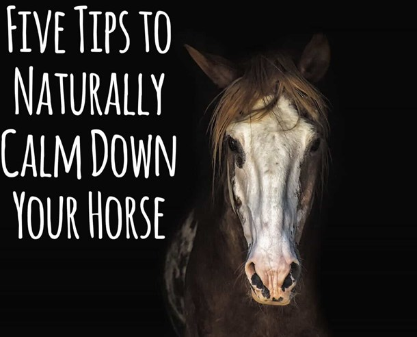 Thumbnail Five Tips for Naturally Calming Your Horse