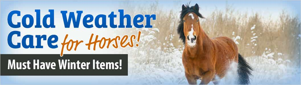 Cold Weather Care for Horses