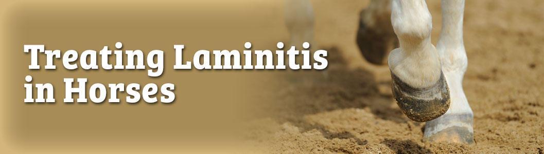 Treating Laminitis in Horses