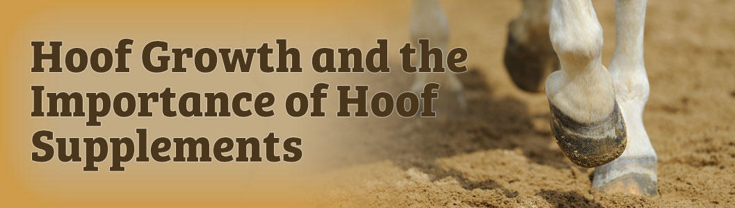 Hoof Growth and the Importance of Hoof Supplements