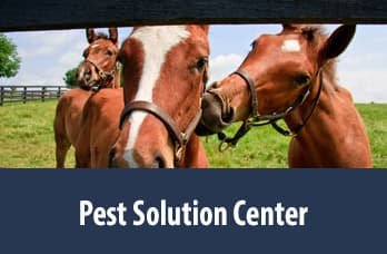 Pest Solution Center