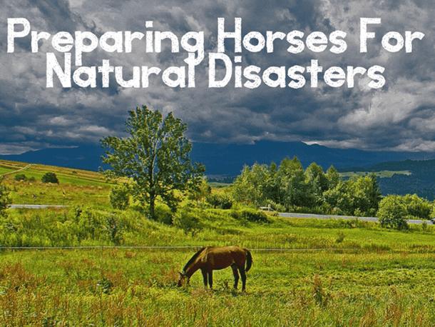 Thumbnail Preparing Horses for Natural Disasters