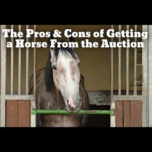 Getting a Horse From Auction - the Pros and Cons