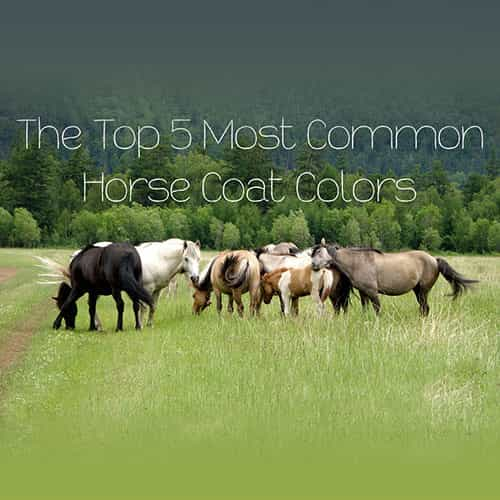 The 5 Most Common Horse Coat Colors