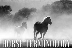 Thumbnail Horse Terminology