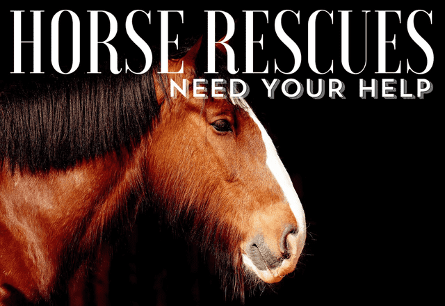 Horse Rescues Need Your Help