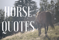 Thumbnail Heartwarming Quotes About Horses