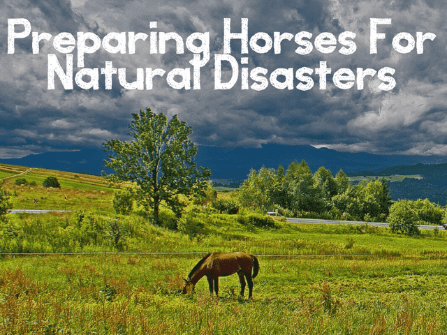 Preparing Horses for Natural Disasters